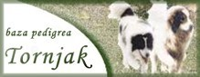 Klik na Tornjak - baza pedigrea!