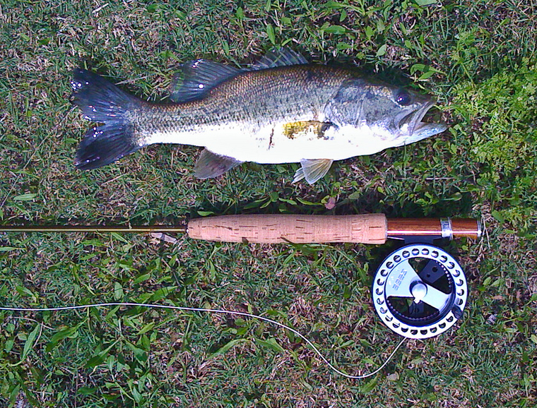 Ultralight fly fishing selective bass for Ultralight fly fishing