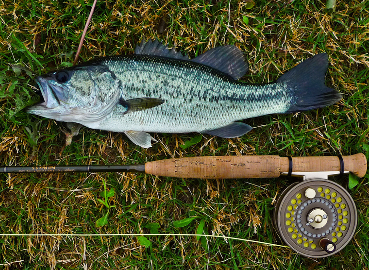 Ultralight fly fishing bass are hungry for Ultralight fly fishing