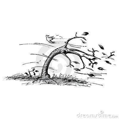 baum-im-wind-22801411.jpg