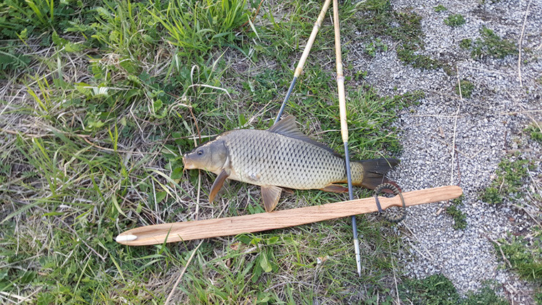 Banner Image: Fish taken with atlatl by Centerx
