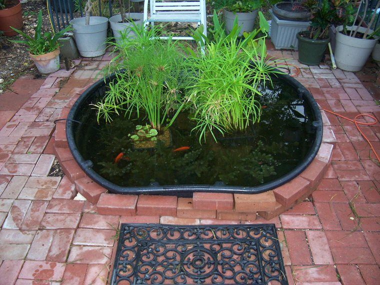 Kiddie pool for outdoor pond the planted tank forum for Koi pond kiddie pool