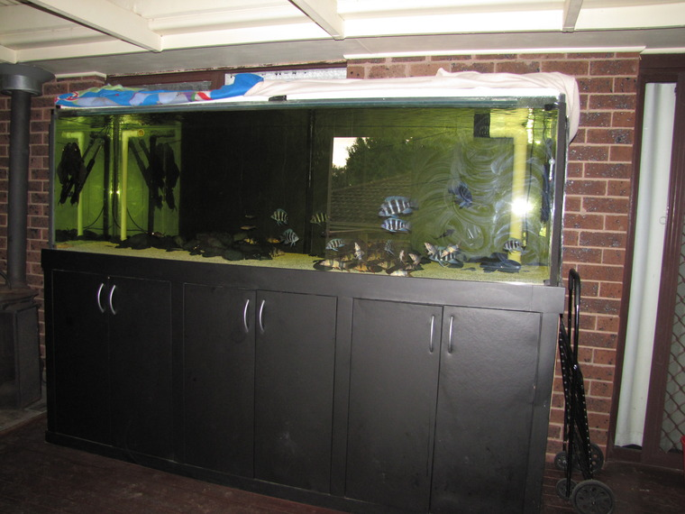 Aquarium for sale cheap selling cheap fish tank for sale for Fish tanks for sale ebay