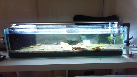FS MELB Mr Aqua 12g Bookshelf Tank