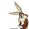 Rabbit 51