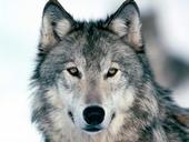 Walter Wolf
