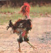 chickengeorge