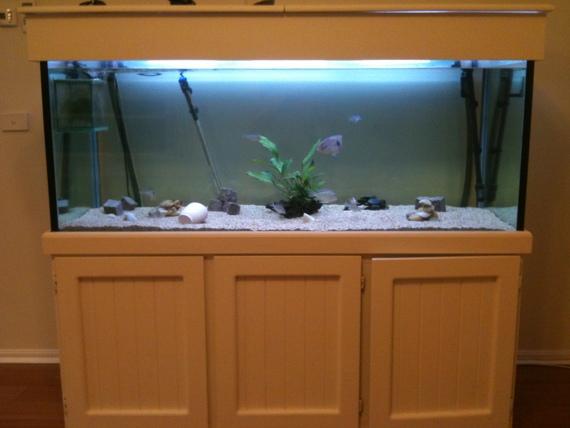 6 foot aquarium stand 1000 aquarium ideas for Used fish tanks for sale many sizes