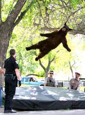 Boulder Badger