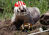 KC Badger