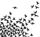 Blackbird5