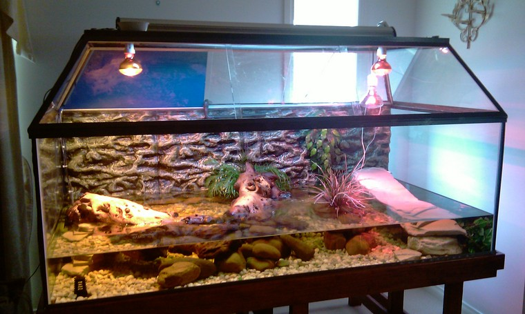 FISH ROOM CLEARENCE/ some fishes n a WHOLE CROCODILE TANK SET UP in