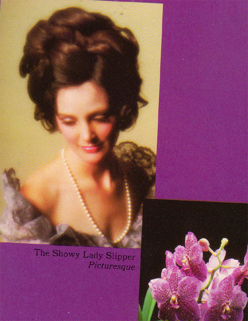 showyladyslipper copy.jpg