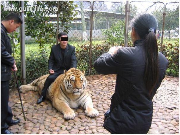 Comparação de  tamanho entre  animais  e   Seres humanos - Página 2 92316716a2f98cc5ae74a481b238c12a66d44472