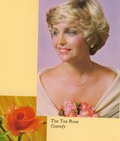 tea rose copy.jpg